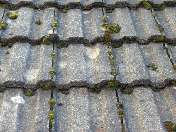 Concrete roof tiles with moss growth